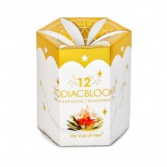 Box of 12 Zodiac Bloom!